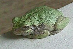 Tree Frog on Porch Rail